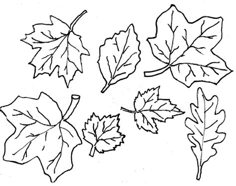leaf outline printable coloring home