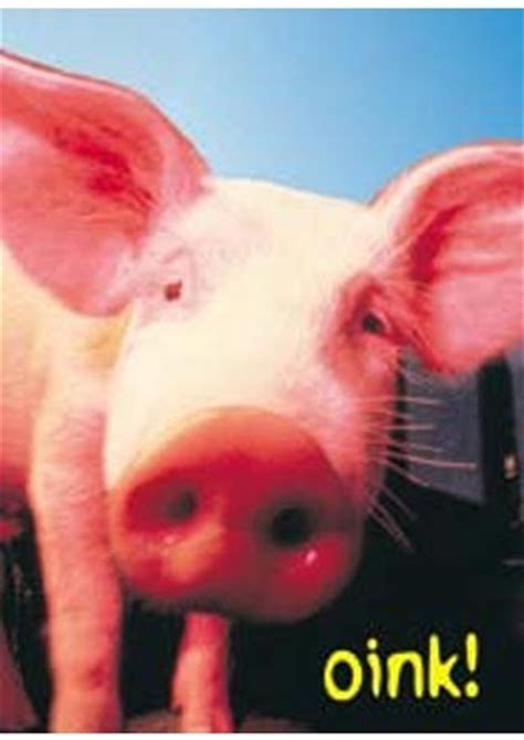 Wall Murals For Sale oink pig poster buy online