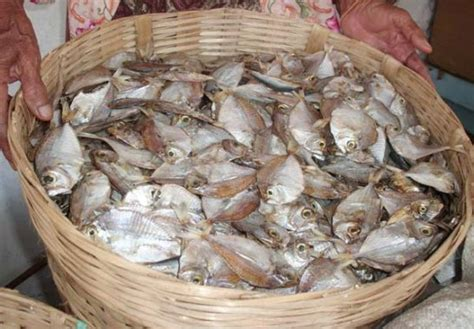 ikan ceria ikan bete bete budaya indonesia