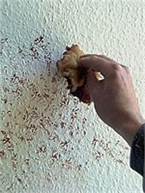 ausgefallene wandfarben tupftechnik die heimwerkerseite de