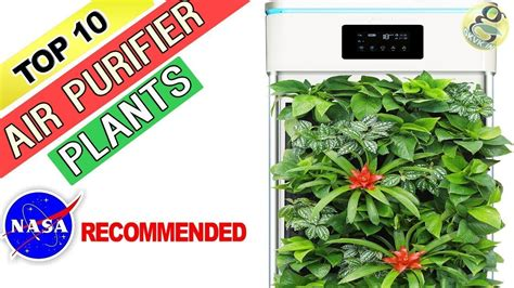 air purifying plants nasa recommended house