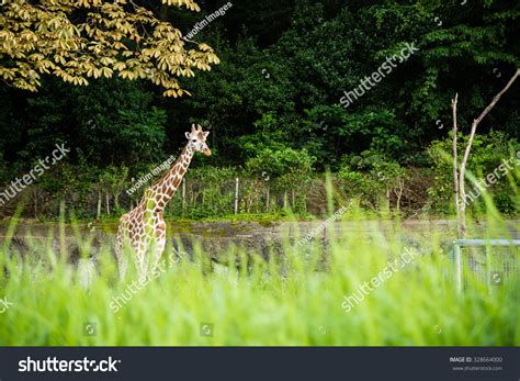 Higashiyama Zoo And Botanical Gardens Nagoya Japan August 15 2015 Reticulated Stock Photo 328664000