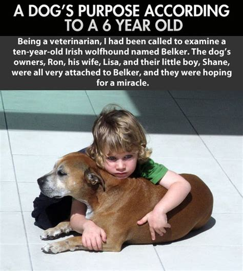 do dogs when they are dying kid explains why humans live longer than dogs 2 pics