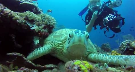 best scuba diving spots in the world explore sipadan one of the best dive spots in the world