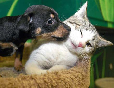 imagenes animales abrazados imagenes de animales tiernos