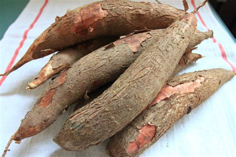 cassava download images photos and pictures