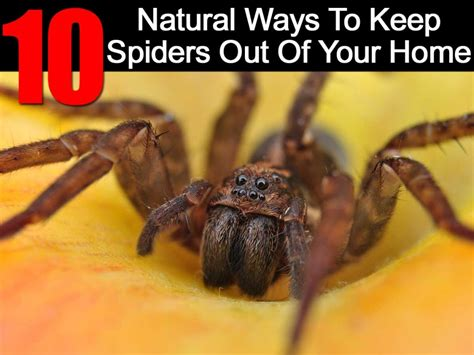 how to keep spiders out of the house 10 natural ways to keep spiders out of your home ohsimply com