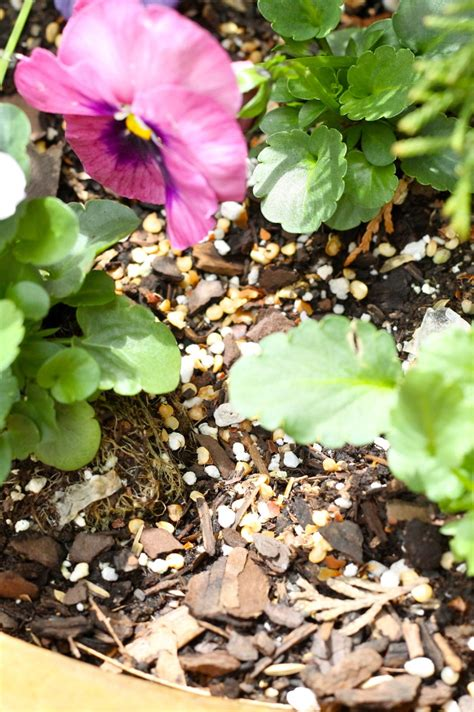 how to keep squirrels out of flower beds how to keep squirrels out of flower beds the best 28
