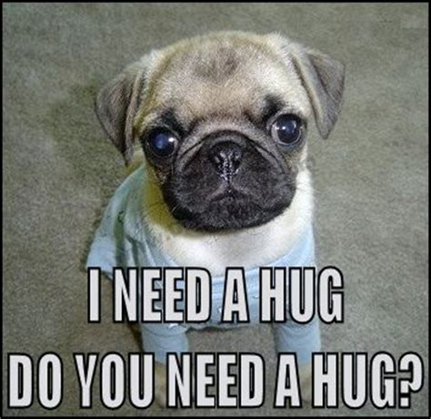 pugs not hugs i miss the hugs with levi