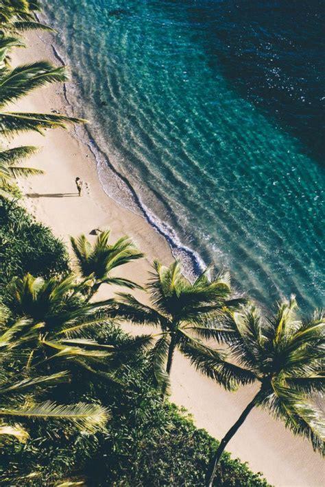 palm trees wallpaper - Palm Tree Wallpaper
