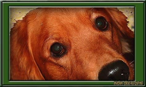 heimlich maneuver on dogs cpr and heimlich maneuver