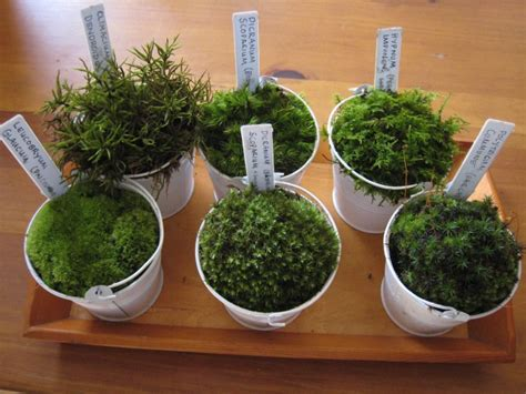 how many types of mosses are there moss identification pictures new