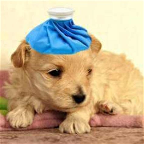 is puppy vomiting should you worry