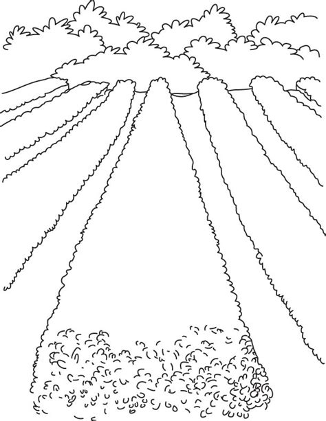 field of flowers coloring page flower field coloring pages