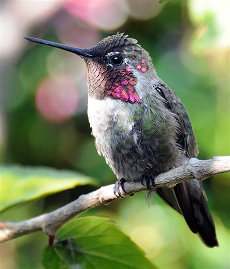 facts about hummingbirds on national hummingbird day
