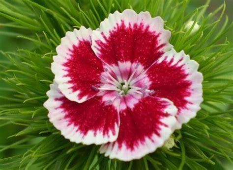 imagenes todo flores significado de las flores toda la informaci 243 n de flores