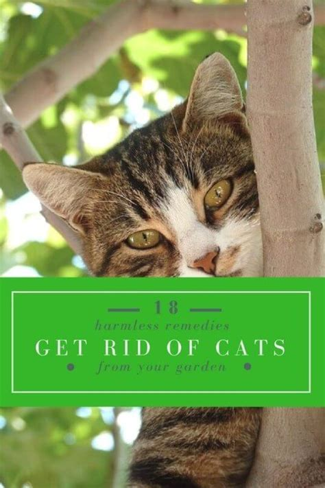 how to get rid of cats in your backyard 18 harmless remedies to get rid of cats