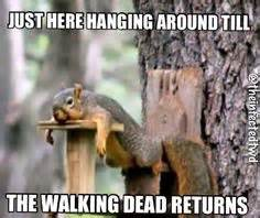 Dead Squirrel Meme - 1000 images about fav walking dead memes on pinterest