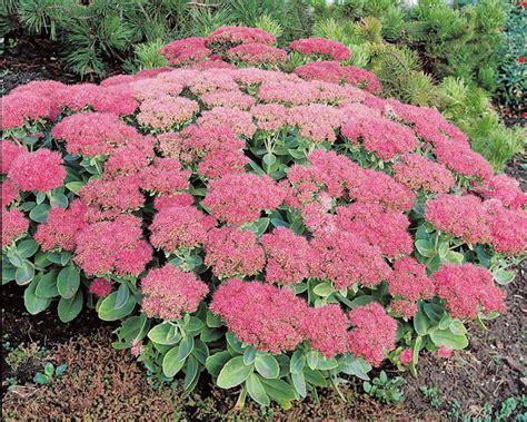 Plantes Et Jardins by Plantes Pour Jardin De Rocaille Tendances D 233 Co D 233 Co