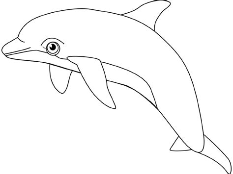 Dolphin Coloring Pages Team Colors Coloring Page Dolphin