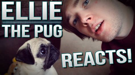 dantdm ellie the pug ellie the pug reacts tdm vlogs episode 26