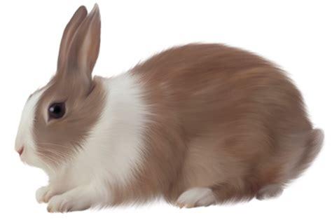 åe R N Kaniner