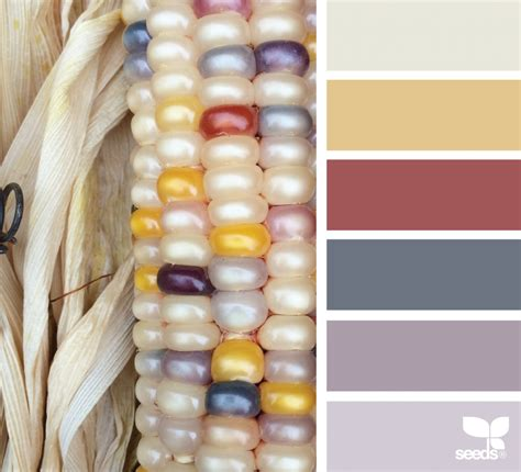 industrial color labs colors of corn color corn design seeds