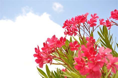 fiori di colore rosa fiori di estate di colore rosa scaricare foto gratis