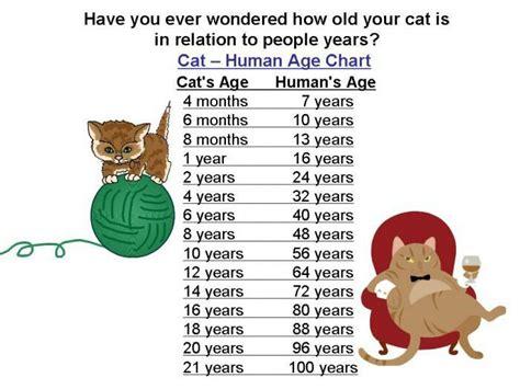 years vs human years cat years vs human years omg amino