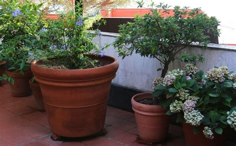 terra cotta planters gardening 101 how to prevent cracks in terra cotta