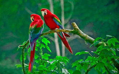 wallpaper full hd parrot parrots paradise wallpapers hd wallpapers id 13080