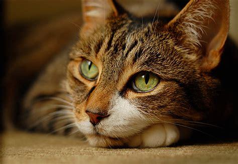 alimenti per gatti agri pet alimenti cani gatti e piccoli animali