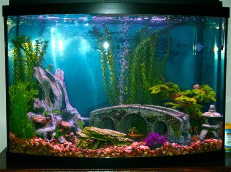 cuisine home decoration aquarium design ideas house