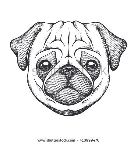 pug black and white drawing fawn pug stock images royalty free images vectors