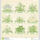 ... chives garlic parsley dill sage and basil, herbal vintage background