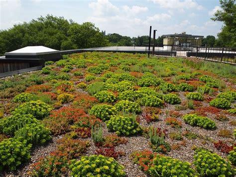 light extensive green roof