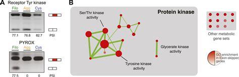 regulated aggregative multicellularity   close
