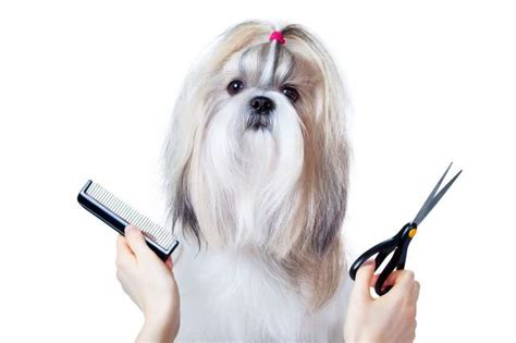 best pet clippers for shih tzu best clippers for shih tzu march 2018 buyer s guide and reviews