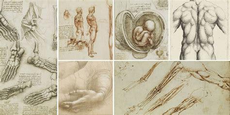 leonardo da vinci anatomy references