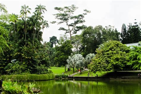 Singapore Botanic Gardens Shore Excursions Asia Largest Botanical Garden In World