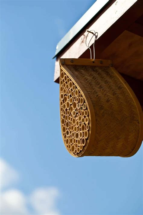 Gardeners Supply Bee House Bee House Steamy Kitchen Recipes