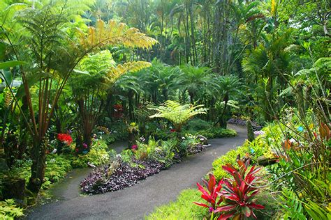 Hawaii Tropical Botanical Garden by Scenic Drive To A Botanical Garden On Big Island Hawaii