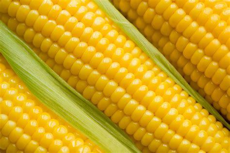 el corn clsicos de ذرة corn المرسال