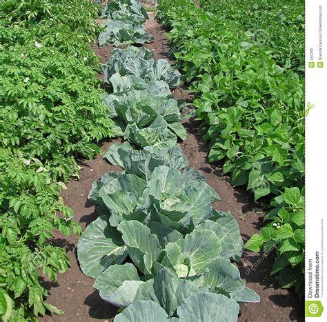 Vegetable Garden Stock Image Image Of Patch Food Free Vegetable Garden