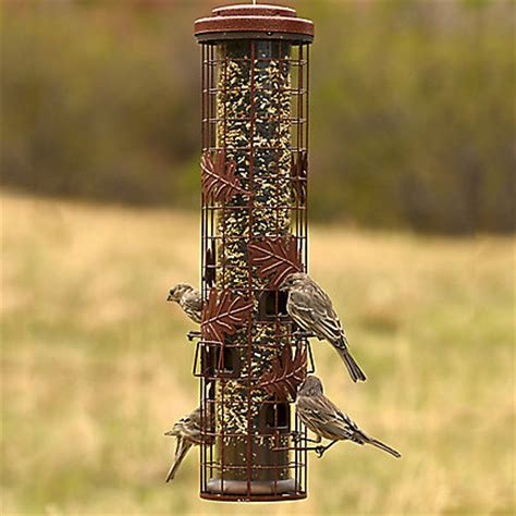 perky pet 174 squirrel be gone 174 cylinder wild bird feeder