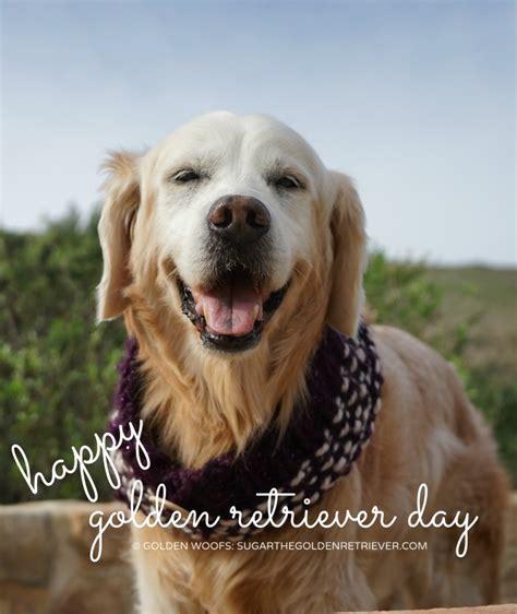 golden retriever events happy international golden retriever day golden woofs
