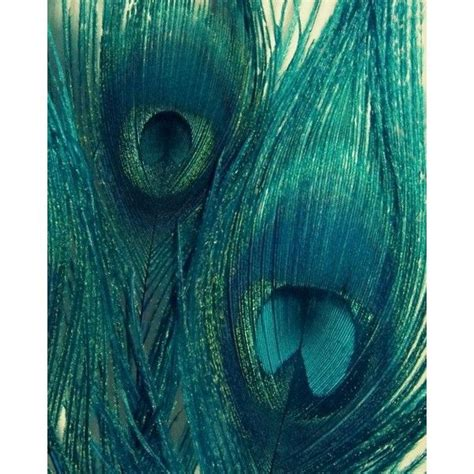 color similar to teal items similar to teal peacock feathers bird feathers