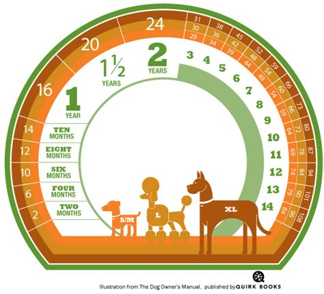 age in human years calculate your s age in human years