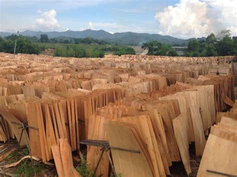 Eucalyptus Plywood Manufacturer