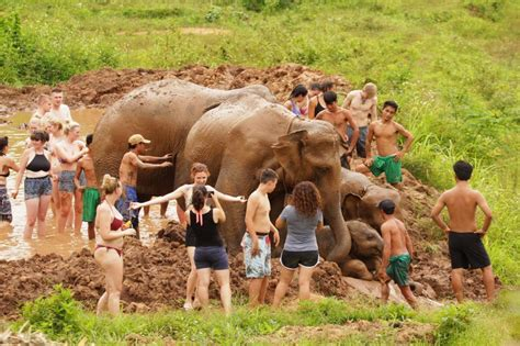 best of chiang mai best elephant cs in chiang mai chiang mai tours